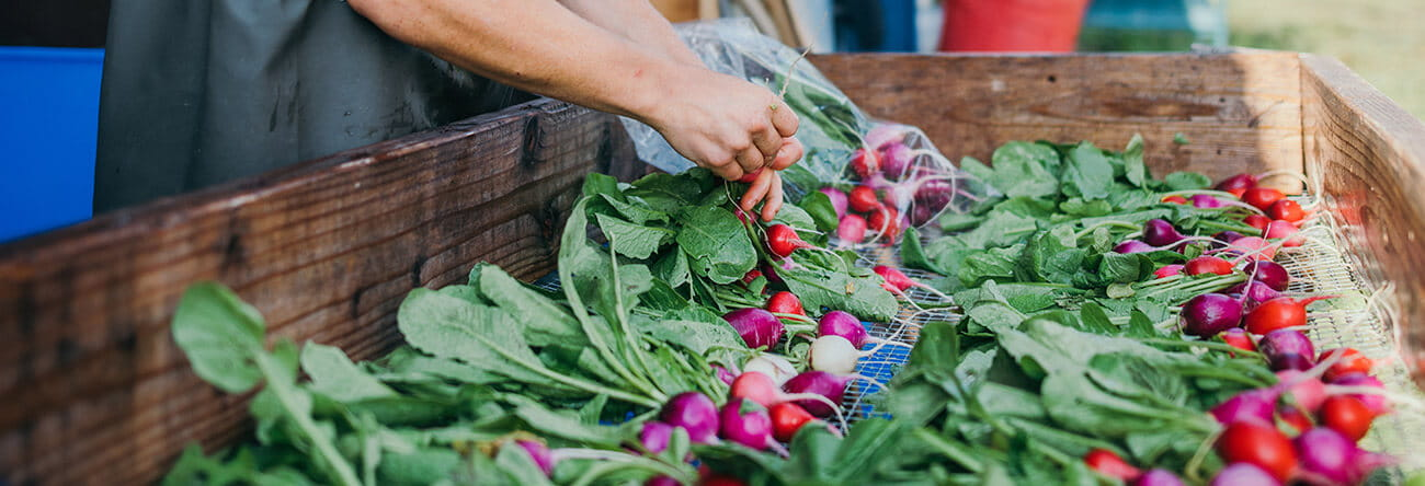 The Little Nell environmental initiatives include the hotel's commitment to using fresh, organic ingredients from local farms, such as these radishes from Rock Bottom Ranch.